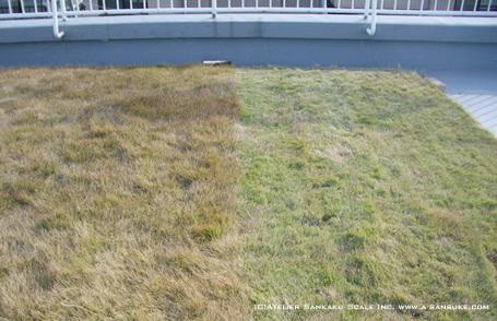 芝刈り1219.jpg